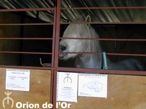 Orion de l'Or